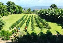 Big Island Vacation Rental
