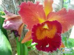 Hawaiii Flower