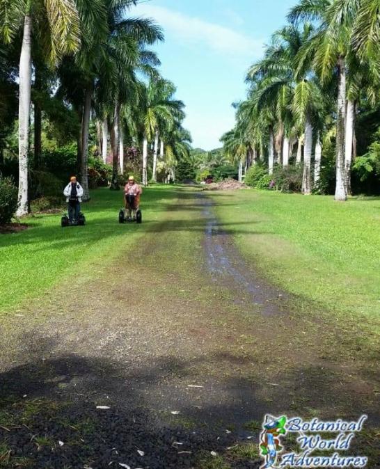 Palm Drive Hawaii