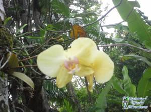 Hawaii Gardens at Botanical World Adventures