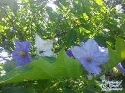 Hawaii Zipline - botanical World Adventures