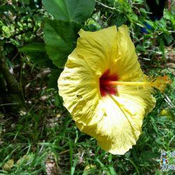 Hawaii Activity