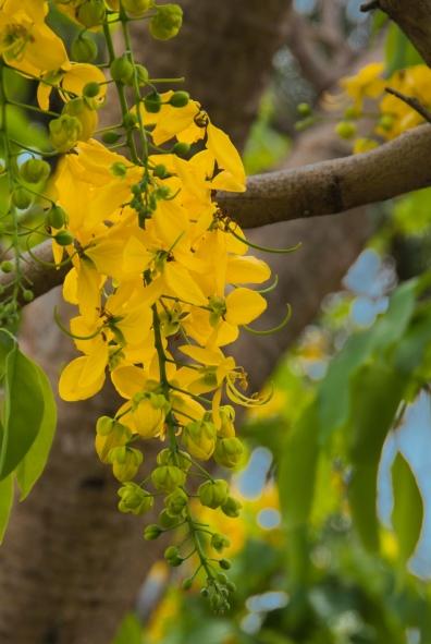 Botanical Garden Hawaii Big Island