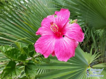 Botanical World Adventures BotanicalWorld.com