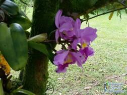 Segway Hawaii